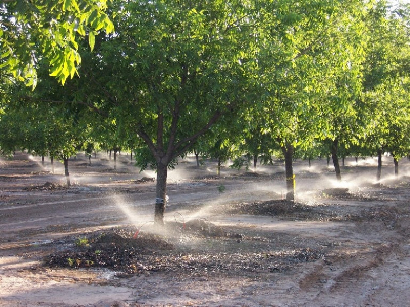 Pecan Orchard.watered-min